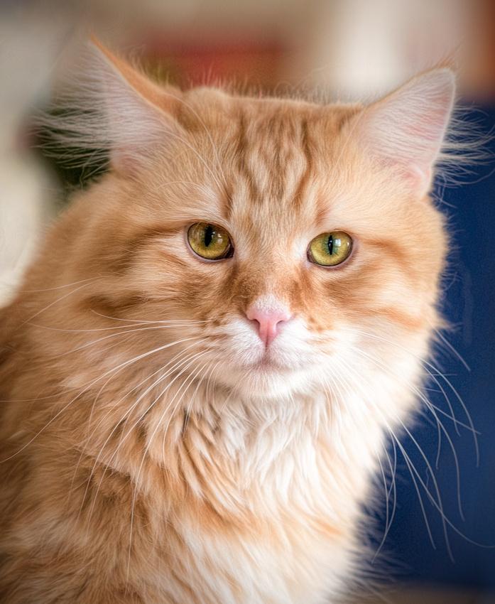 Katzen(Tuerck)-075-2000-3