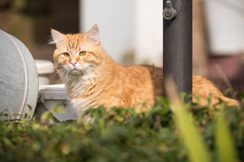 Katzen(Tuerck)-095