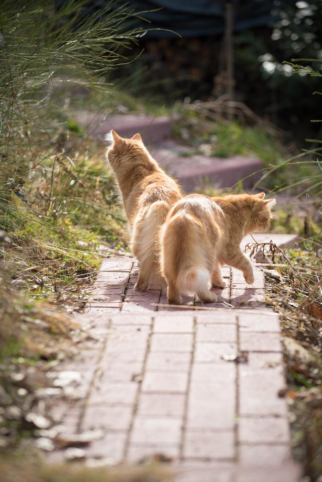 Katzen(Tuerck)-105
